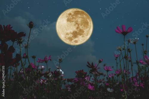 Fotografiet Dark cosmos flower with full moon at night.
