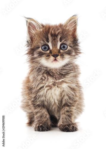 Fototapeta One little kitten.