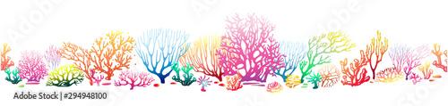 Fotografiet Border pattern with multicolor Corals