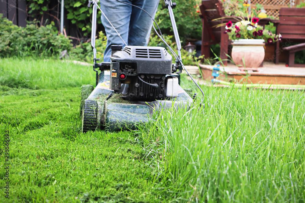 Clsoeup of a lawnmower cutting tall grass <span>plik: #295565593 | autor: Amelia</span>