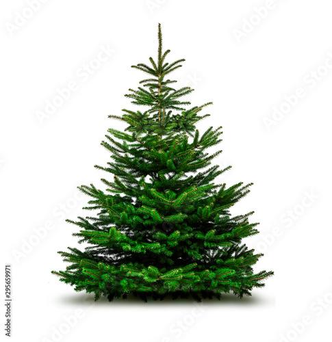 Obraz na plátně Grüne Wehnachtsbäume isoliert auf weißem Hintergrund