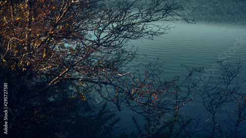 Blue lake through tree