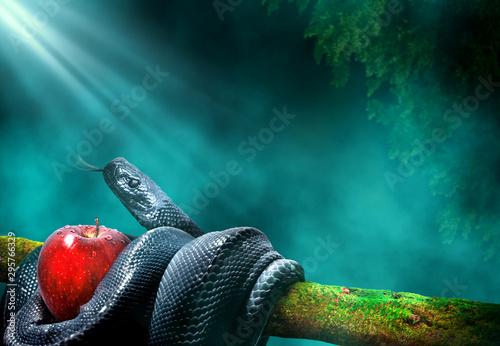Obraz na plátně Black snake with an apple fruit in a branch of a tree