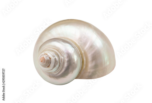 Fotografía Pearl snail seashell isolated on white background