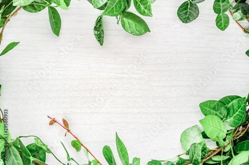 観葉植物と木目のフレーム