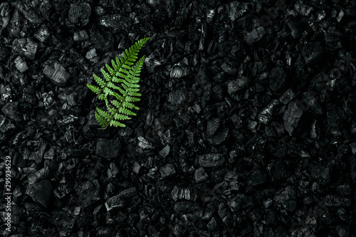 Fotografia Nature concept, Frame of green twigs and leaves on a dark coal background