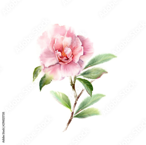 Fotomural Watercolor Camellia big pink flower on a tree branch