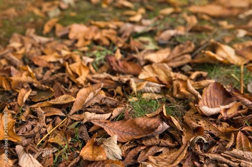 Fototapeta premium Kolorowe liście.