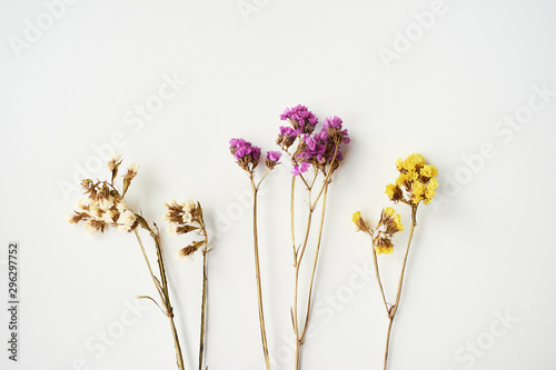 Fotografie, Obraz Dried wild flowers on white table background top view.