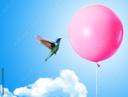 Obraz na płótnie A hummingbird is about to pop a balloon