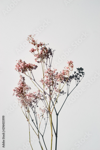 Obraz na plátně Dried wild flowers on white table background top view.