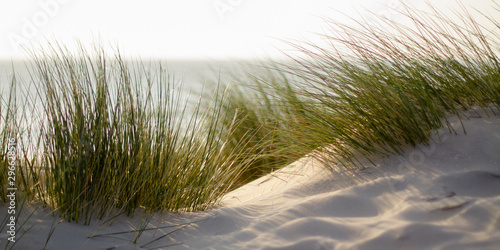 Fotografia green grass on the beach with shallow depth of field and sea in the background