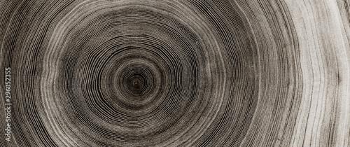 Ciepła, szara struktura drewna. Szczegółowa czarno-biała tekstura powalonego pnia drzewa lub pnia. Szorstkie organiczne pierścienie drzew z bliska ziarna końcowego.