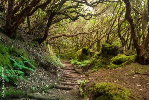 Carta da parati The path of the enchanted forest Park of Anaga, tenerife island