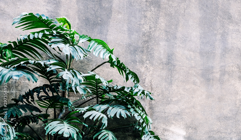 Philodendron in the garden Tropical leaves background