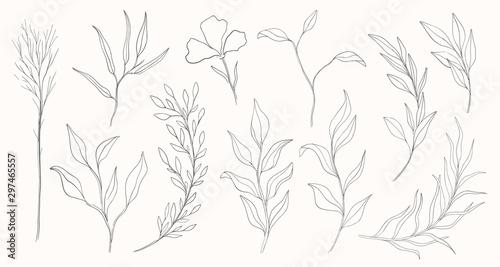 Foto Plant nature hand drawn set