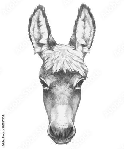 Foto Portrait of Donkey