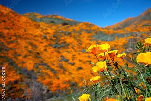 Carta da parati Wildflower Super Bloom