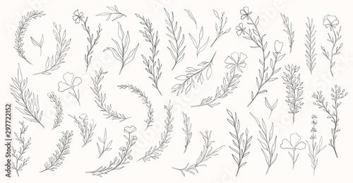 Slika na platnu Plant nature hand drawn set