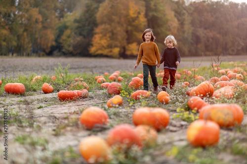 Obraz na plátně Two little boys having fun in a pumpkin patch