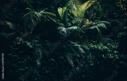 Fotografia Tropical leaves background,jungle leaf garden