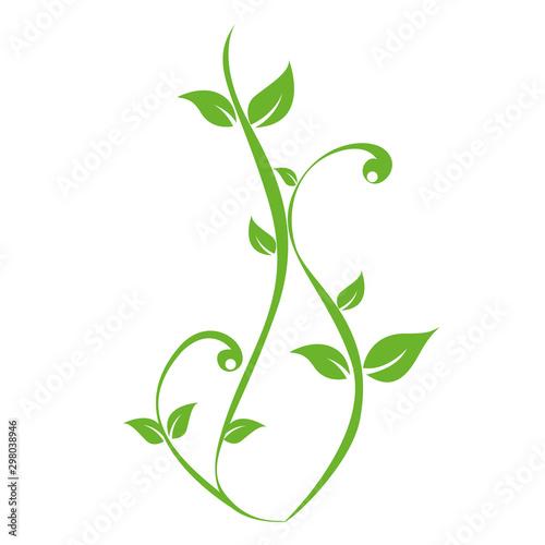 Fotografia green plants tendril on white background vector illustration EPS10