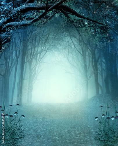 Obraz na płótnie Turkusowa ścieżka przez las