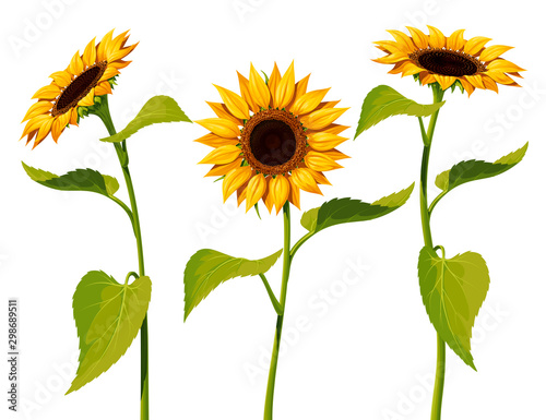 Obraz na płótnie Three sunflower flowers with stems and leaves isolated on a white background