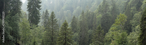 Canvas Print Alpine Forest
