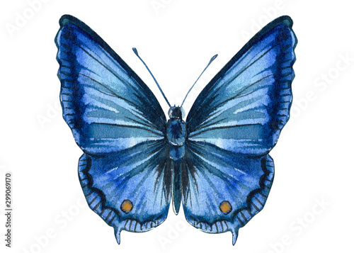 Fototapeta blue butterfly on an isolated white background, watercolor illustration, hand dr