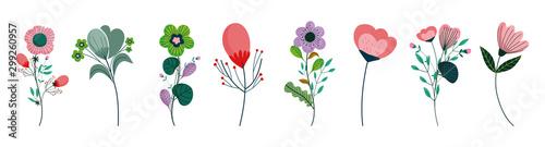 zestaw różnych kwiatów dekoracji na białym tle