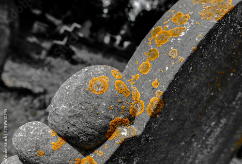 Fotografia, Obraz Abstract view of kitchen seen growing on an old and weathered headstone at a cemetery