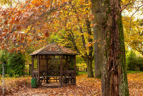 Fototapeta Wooden arbor in the autumn forest.Natural landscape.