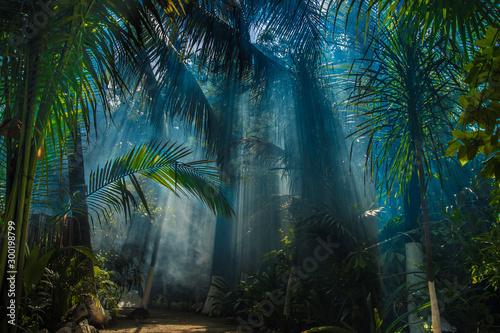 Fotografia Morning light in beautiful jungle garden