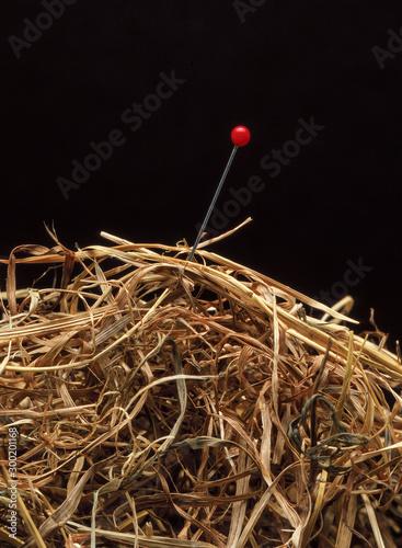 Canvastavla needle in haystack