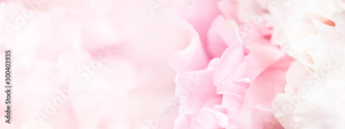 Banner for website with closeup view of pink eustoma flower. Soft pastel wedd...