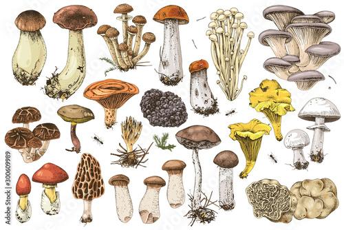 Obraz na płótnie Hand drawn edible mushrooms collection