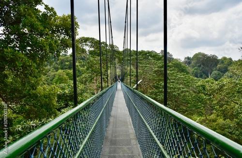 Photo Adventurous treetop walk over suspension bridge in Central Catchment Nature Rese