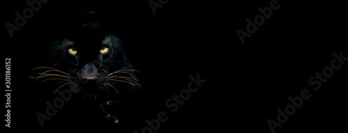 Photo Black panther with a black background