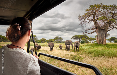 Stampa su Tela Woman on an African safari travels by car with an open roof and watching wild el
