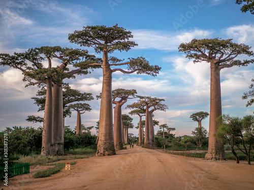 Fotografía Baobabs