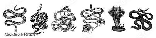 Canvas Print Vintage snake set