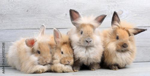Obraz na plátně Group of lovely bunny easter rabbits on wooden background