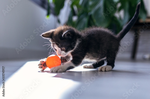 Carta da parati Little black kitten playing and enjoys with orange ball at living room of house