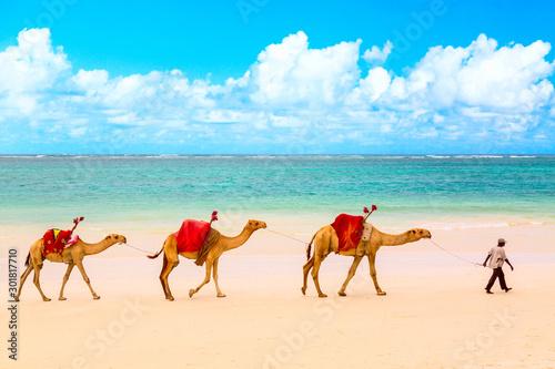 Fototapeta Camels at African sandy Diani beach, Indian ocean in Kenya, African landscape