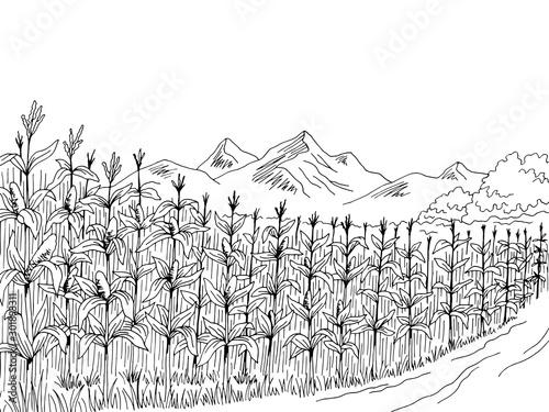 Fotomural Cornfield graphic black white landscape sketch illustration vector