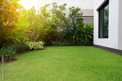lawn landscaping with green grass turf in garden home