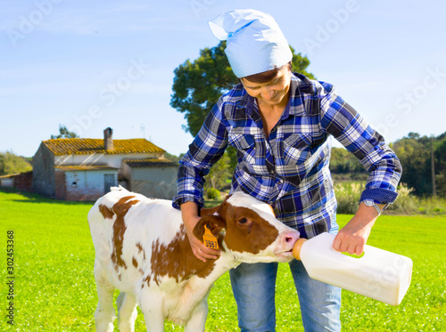 Obraz na płótnie woman feeds two week old calf from bottle with dummy at lawn