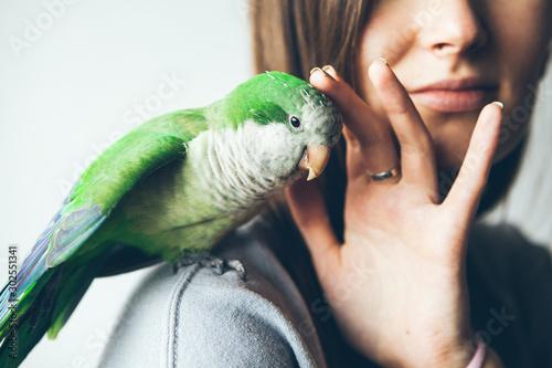 Fototapeta Close-up of friendly and cute Monk Parakeet
