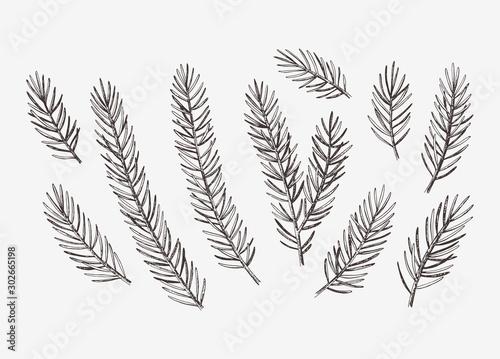 Carta da parati Hand drawn conifer branches set